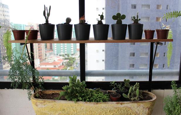 Cactus Juliana Fiorese